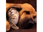 Bayswater Veterinary Clinic - Perth