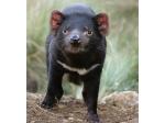Southern Tasmanian Veterinary Hospital - Huonville