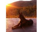 Nepean Mobile Vet - Mobile Pet and Livestock Veterinary Consultations