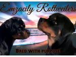Emzacily Kennels - Rottweiler Breeder - Darwin, NT