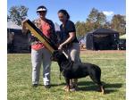 Emzacily Kennels - Rottweiler & Jack Russell Terrier Breeder, Darwin, NT