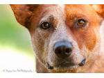Puppy Love Pet Photography - Darwin, NT