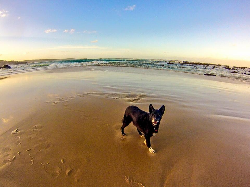 Pet friendly beach at Mystery bay gallery image