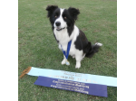 FARLEIGHSTUD - Border Collie Breeder, Armidale, NSW