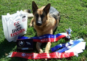 Molly obedience awards gallery image