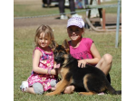 LaGuardia German Shepherds - German Shepherd Breeder - Queensland
