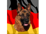 Crossfire Kennels - German Shepherd Breeder - Queensland