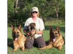 Masterton German Shepherds - German Shepherd Breeder - Queensland