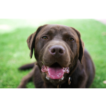 Cost To Get Dog Registered Qld