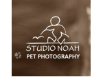 Studio Noah - Pet Photography - Perth, WA