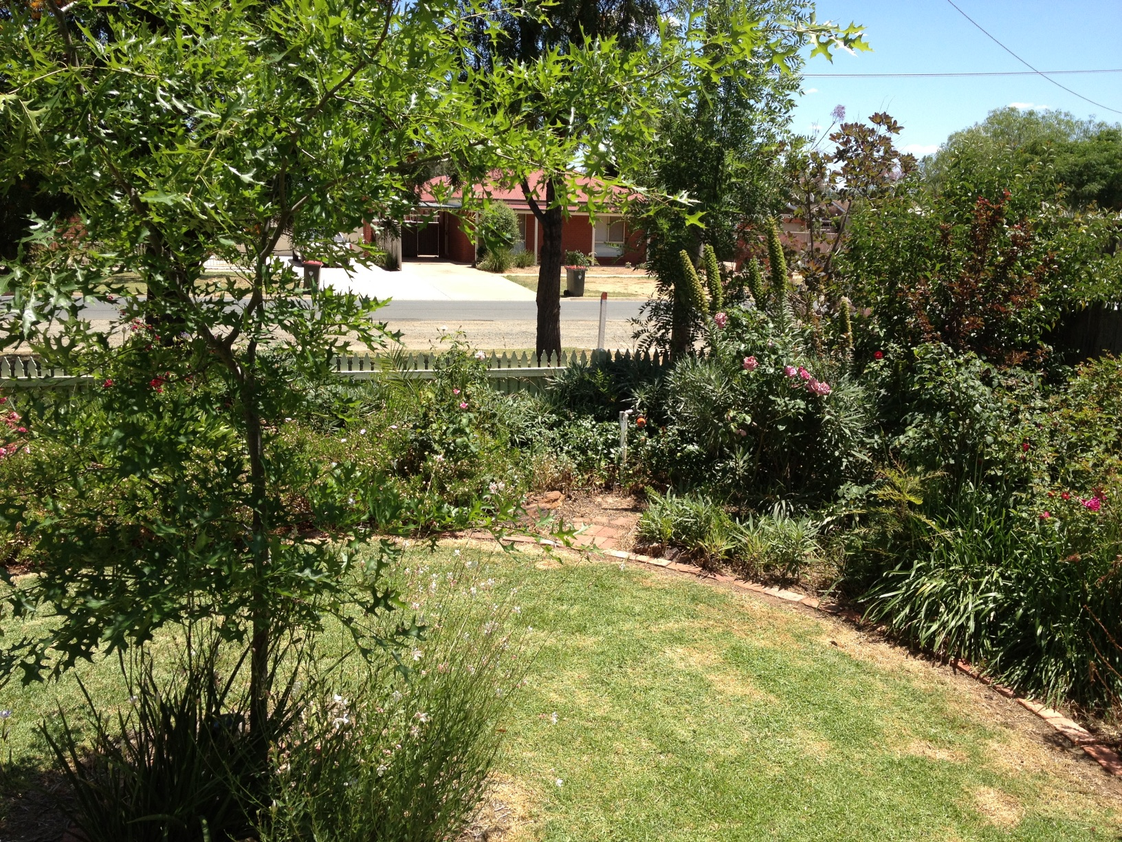 Garden at Paringa Cottage, Echuca - Pet Friendly A gallery image