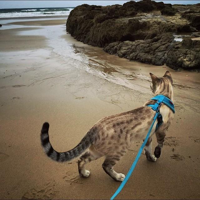 Yuki loves beach walks gallery image