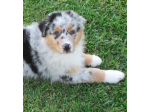 Morrison Animal Care Obedience Essentials - Dog Training and Obedience Products