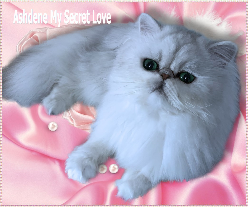 Ashdene My Secret Love gallery image