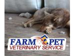 Farm and Pet Veterinary Service - Ganmain, NSW