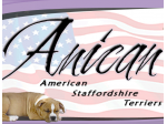 Anican American Staffordshire Terrier Breeder - Melbourne, Vic
