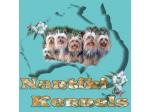 Nantiki Kennels - Australian Silky Terrier Breeder - Narooma, NSW