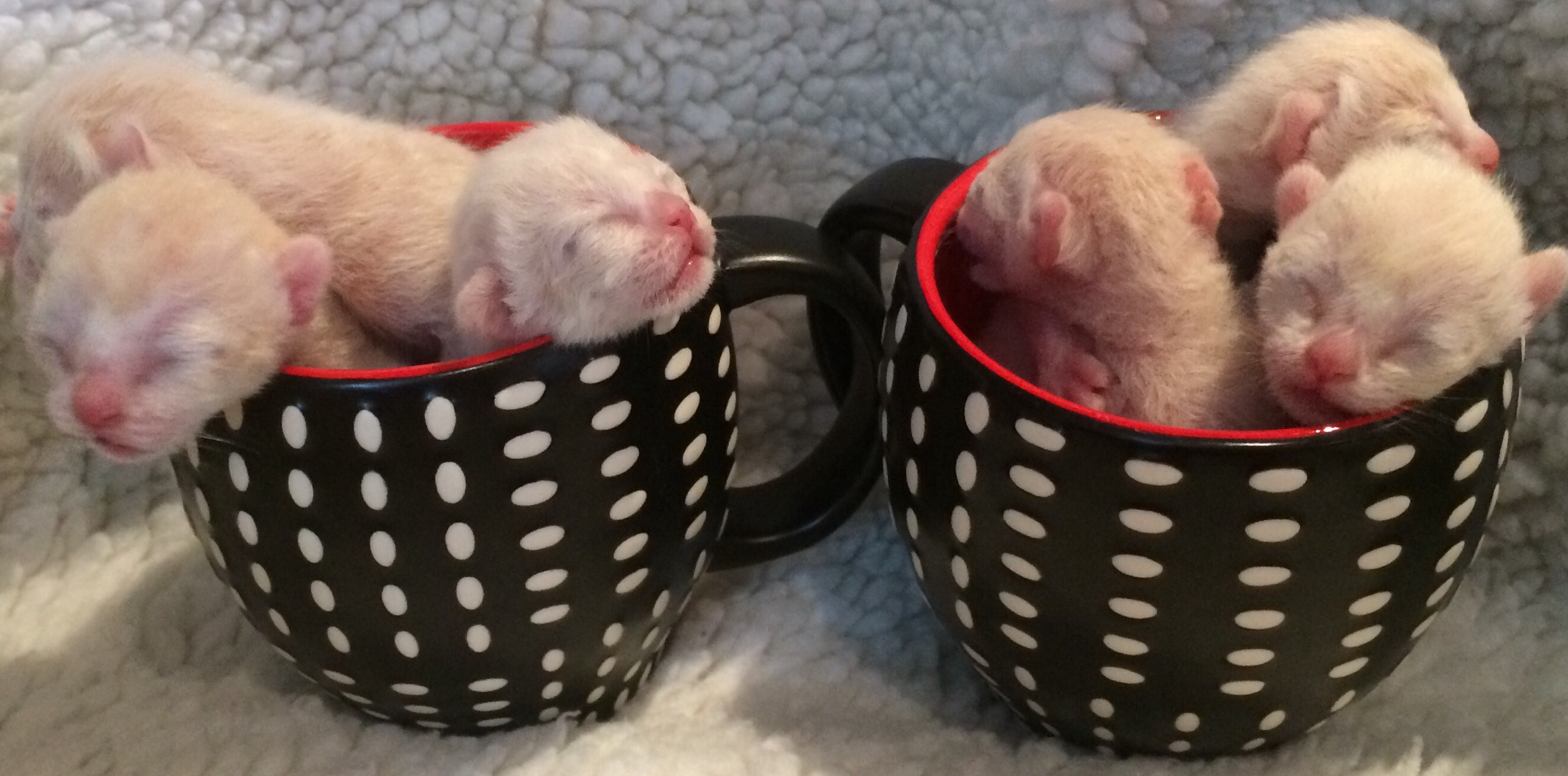 This Litter - 3 days old gallery image