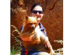 Tagetarl Kennels -   Australian Terriers & Australian Silky Terrier Breeder - Darwin, NT, Australia