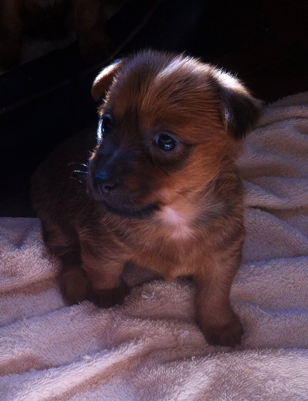 one of our Puppies from past litter gallery image