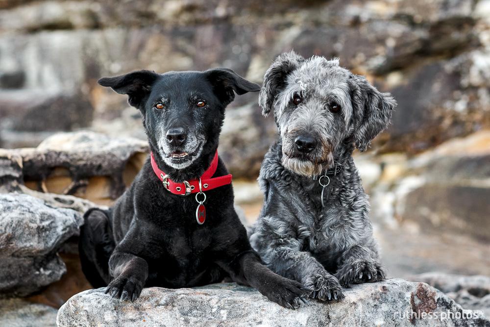 Ruthless Photos - Pet Photographer, Sydney gallery image