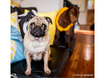 Ruthless Photos - Pet Photographer, Sydney