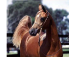Argowan Stud and Equine Rehabilitation & Recovery Facility - Williamstown, NSW