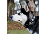Ruthless Leather - Dog Collars and Leads, Online Shop - Sydney