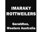 Imaraky Rottweilers - Rottweiler Breeder - Geraldton, WA