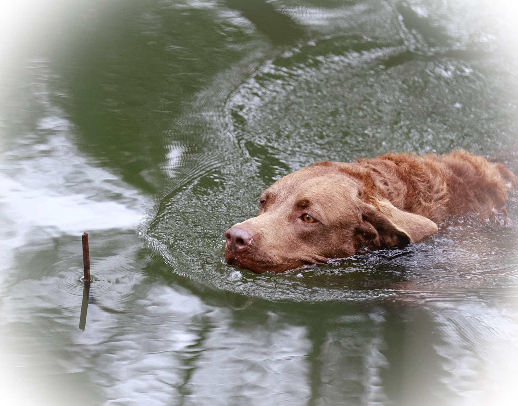 Loves the water gallery image
