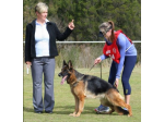 FREMONT Kennels - German Shepherd Breeder - Newcastle, NSW
