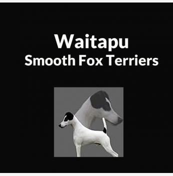 smooth fox terrier breeders waitapu smooth fox terrier breeder maryborough qld 2163