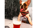 The Carrington -  Pet Friendly Pub - Surry Hills