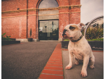 Lux Foundry - Pet Friendly Cafe - Brunswick, VIC