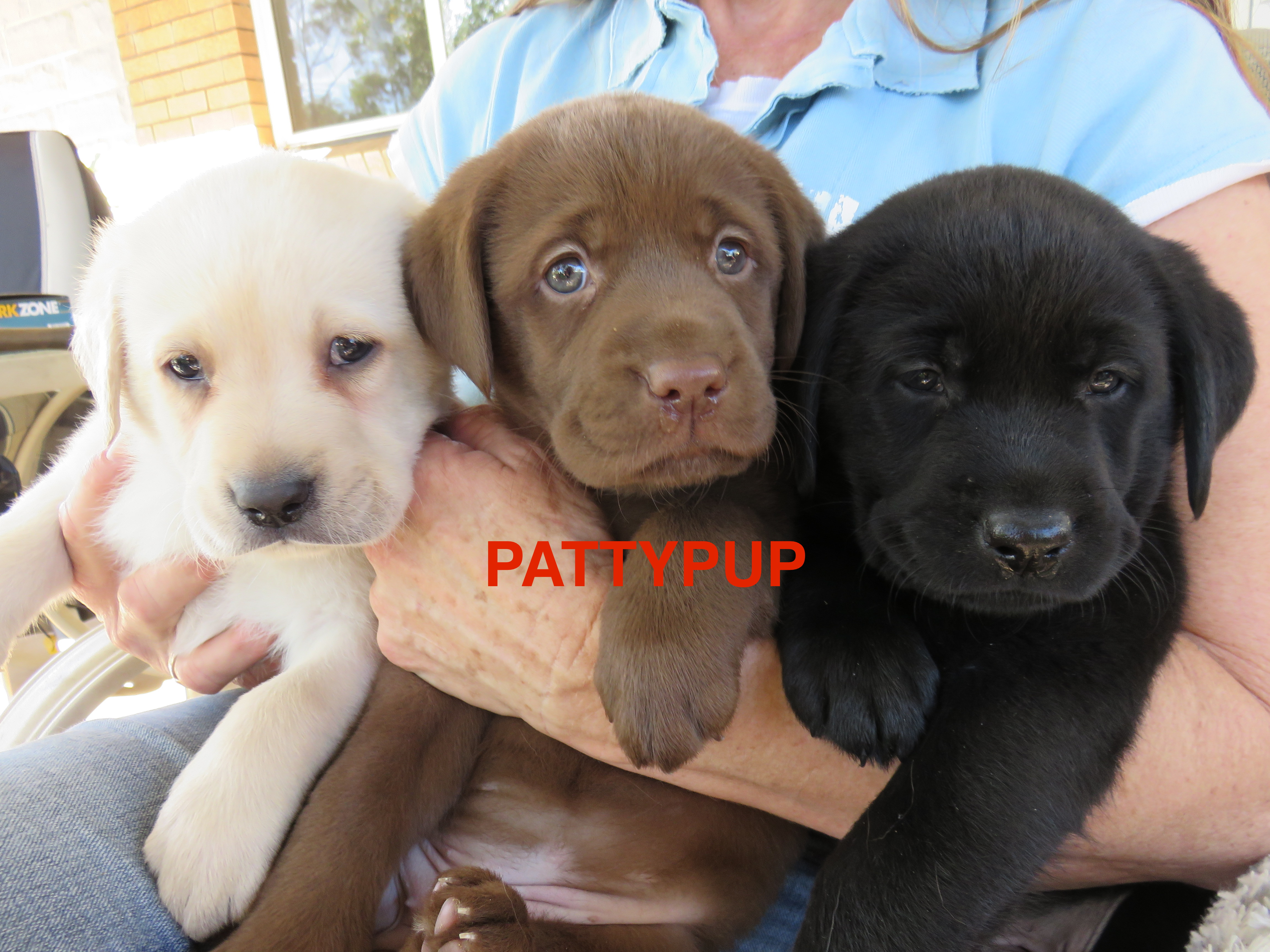 Pattypup