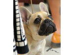 The French Bulldog Club of QLD