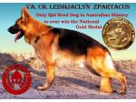 Leishjaclyn German Shepherd Breeder - Brisbane, QLD