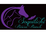 Soquilichi Rescue Ranch - Rehomeing Cats, Dogs & Horses, Animal Rescue - Queensland