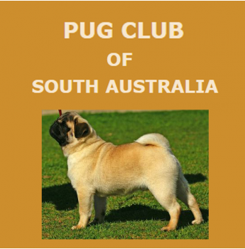 The Pug Club of South Australia