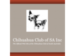 The Chihuahua Club of SA