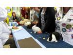 Rabbit Breeders Association Of NSW