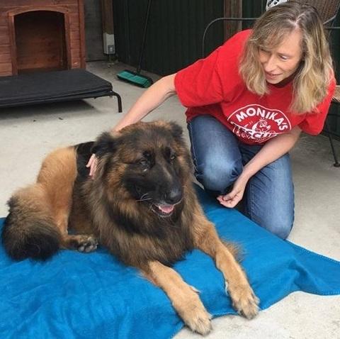 Canine Massage gallery image