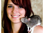 Queensland Rodent Fanciers - A Club for Rat and Mouse Fanciers - Brisbane
