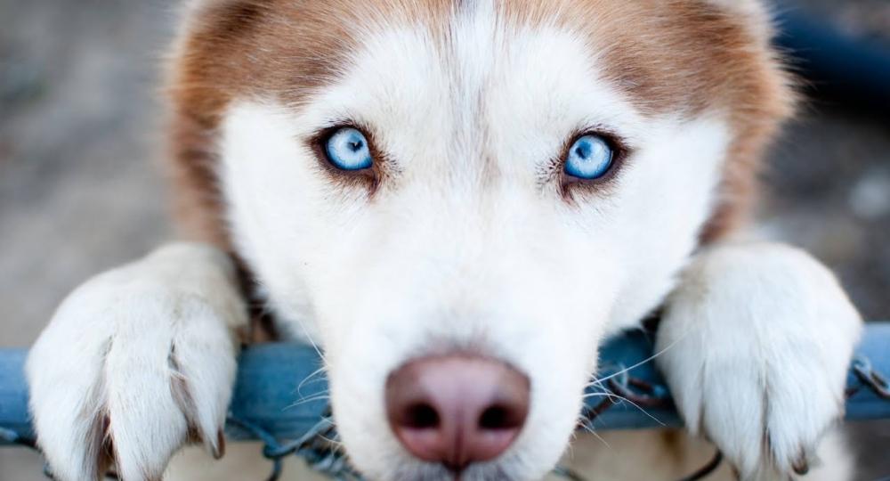 www.thedogmagician.com.au