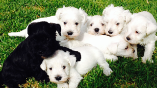 My beautiful white babes born in 2014 gallery image