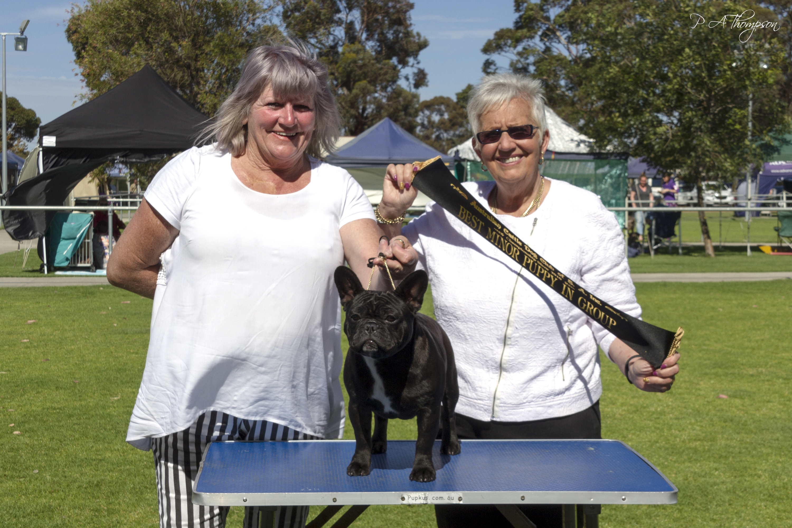 Opal winning Minor Puppy In Group gallery image