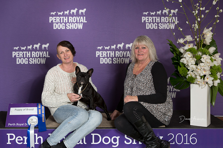 Perth Royal Opal winning Puppy Of Breed,RBCC