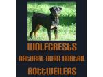 Wolfcrests Natural Born Bobtail Rottweilers - NBBT Rottweiler Breeder - Sunshine Coast, QLD