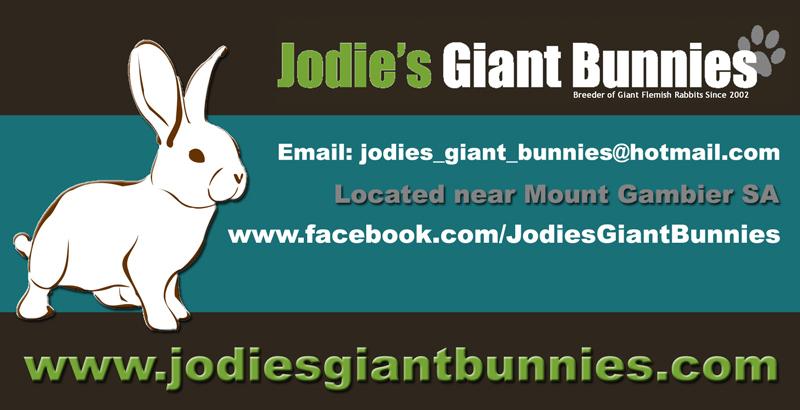 https://www.facebook.com/JodiesGiantBunnies/
