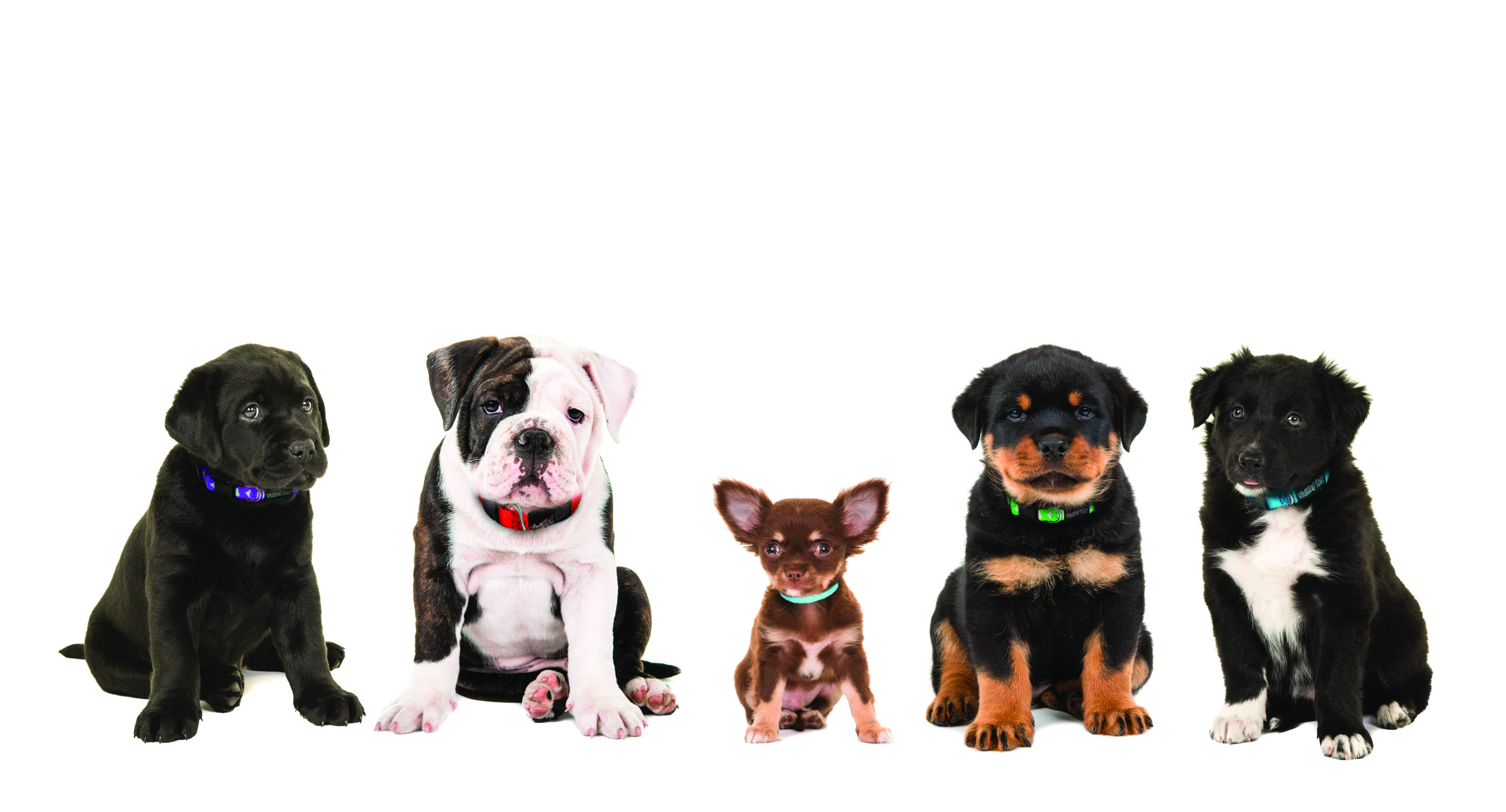 Wagging Tailz Tiny Totz Collars suitable from 6 we gallery image